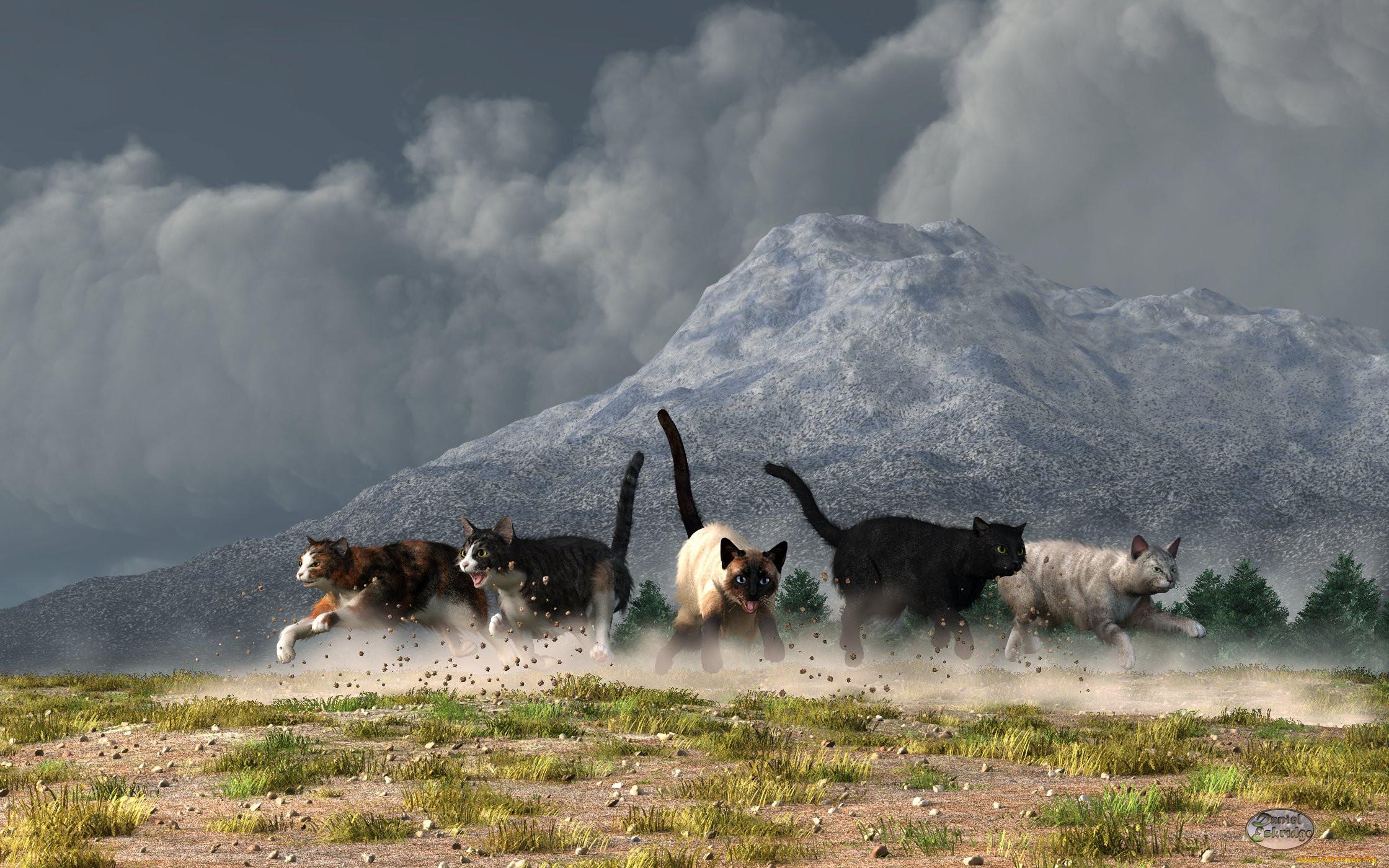 картинки с котами в горах фото названиями